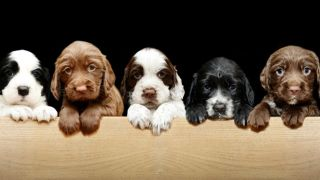 DNA dog test