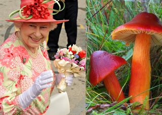 Queen Elizabeth and mushrooms