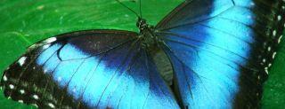 butterflies inspire anti-counterfeit technology
