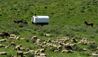 Sheepherder wagon and sheep in high desert of Idaho