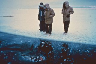 gray whale rescue, Alaska