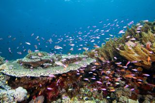 Indo-Australian reef fish