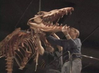 whale-fossil-jaws-101221-02