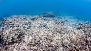 A dead coral reef.
