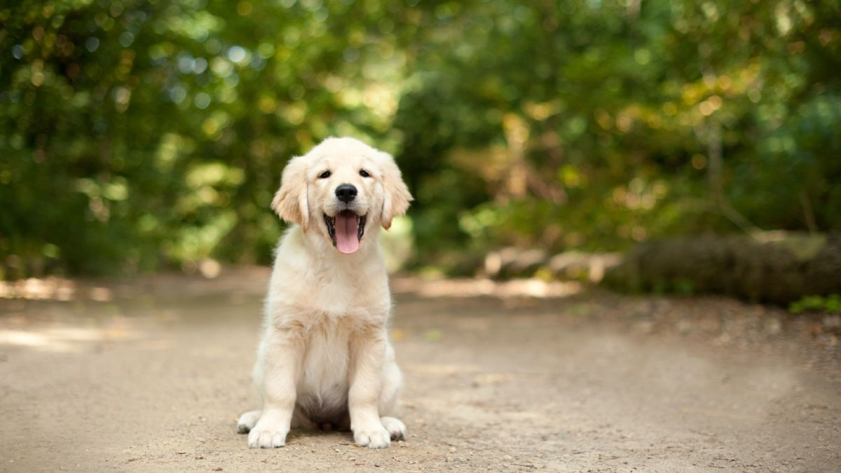 The top names for pandemic puppies has been revealed