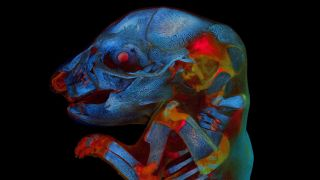 A stunning image of a 21-day-old rat fetus was the big winner of Olympus' annual photo contest.