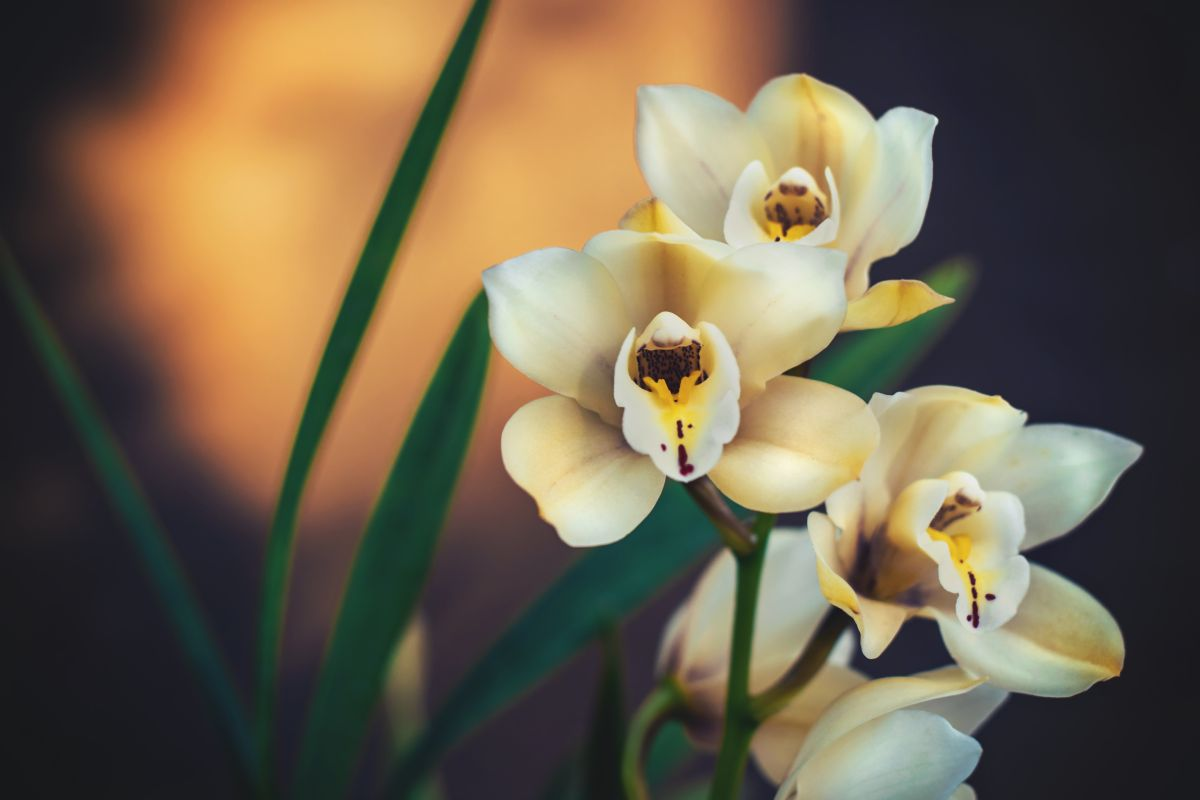 This is how to repot your orchid