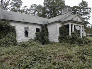 Kudzu attack, invasive species