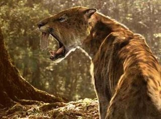 saber-toothed-cat