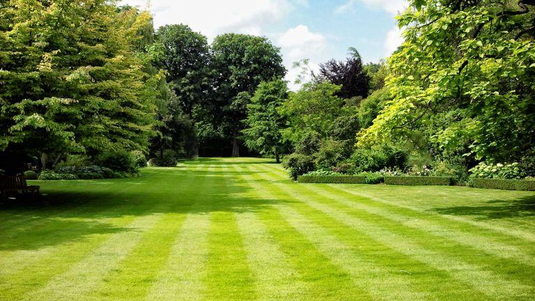 how to scarify a lawn: striped lawn