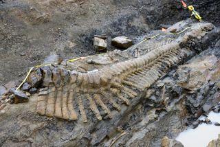 tail of dinosaur