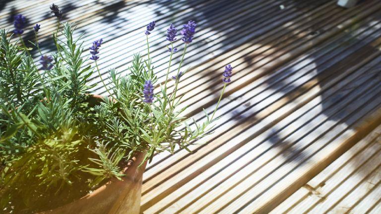 Tough plants on an outside decking