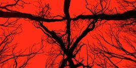 Why Blair Witch Bombed At The Box Office