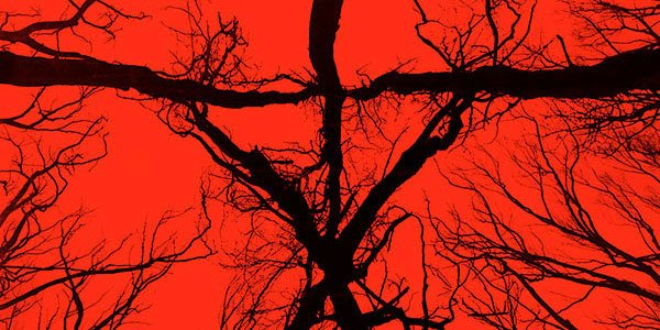 New Blair Witch Trailer: You'll Never Go Back Into The Woods After Watching This