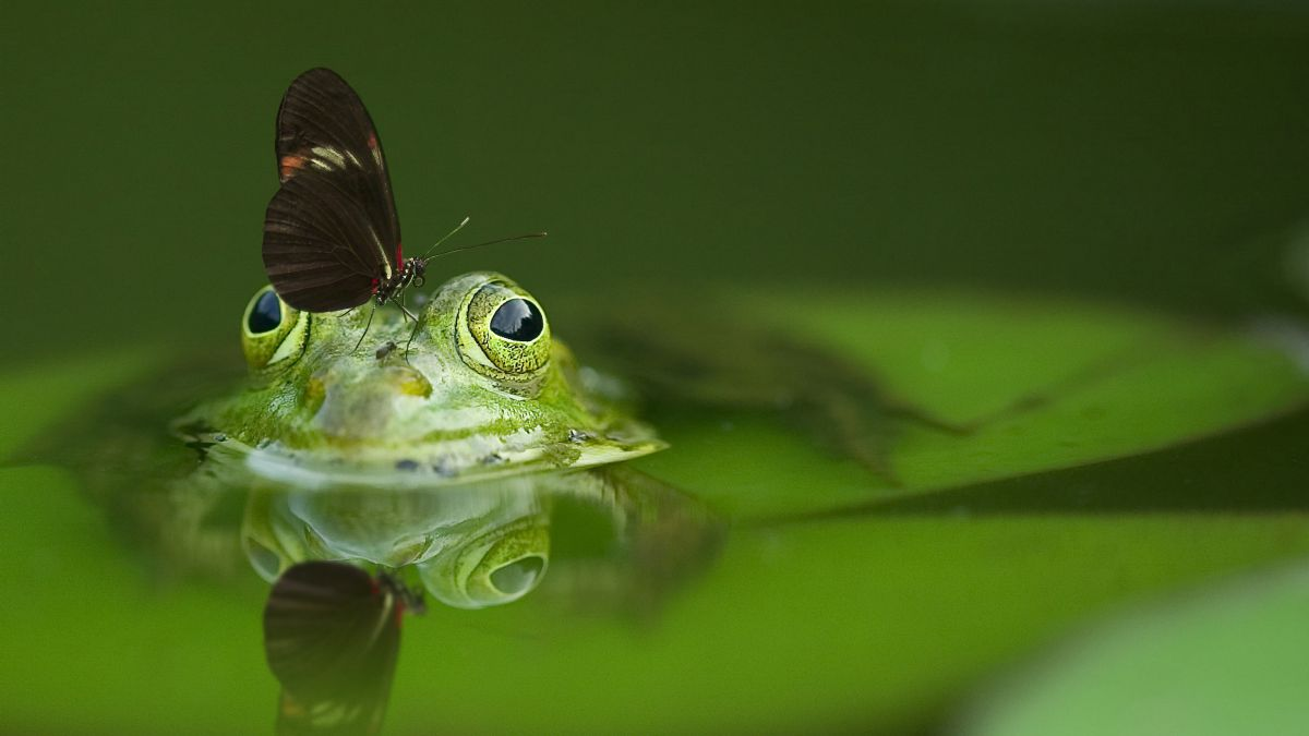 10 essential steps to better macro images