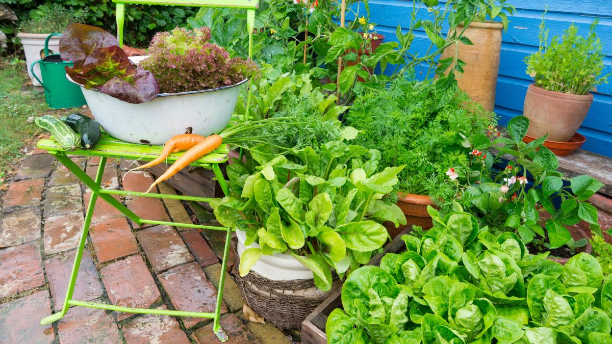 Growing vegetables in pots: everything you need to know