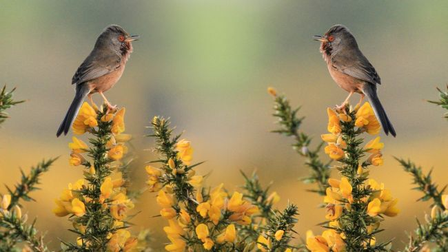 Photoshop tutorials: Two birds in wilderness