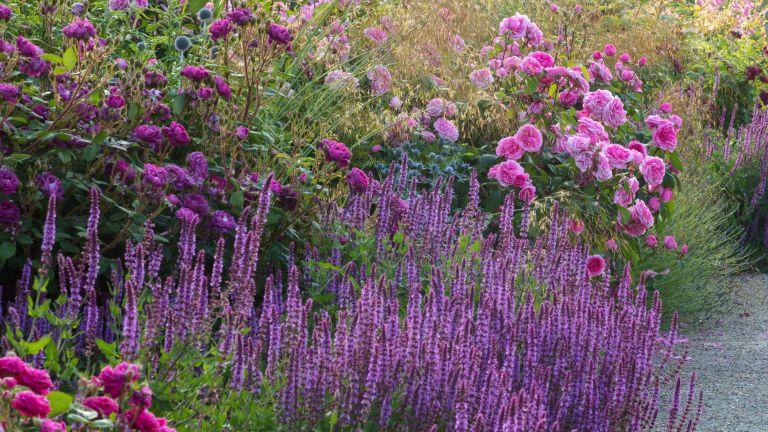 Garden color scheme in pink and purple