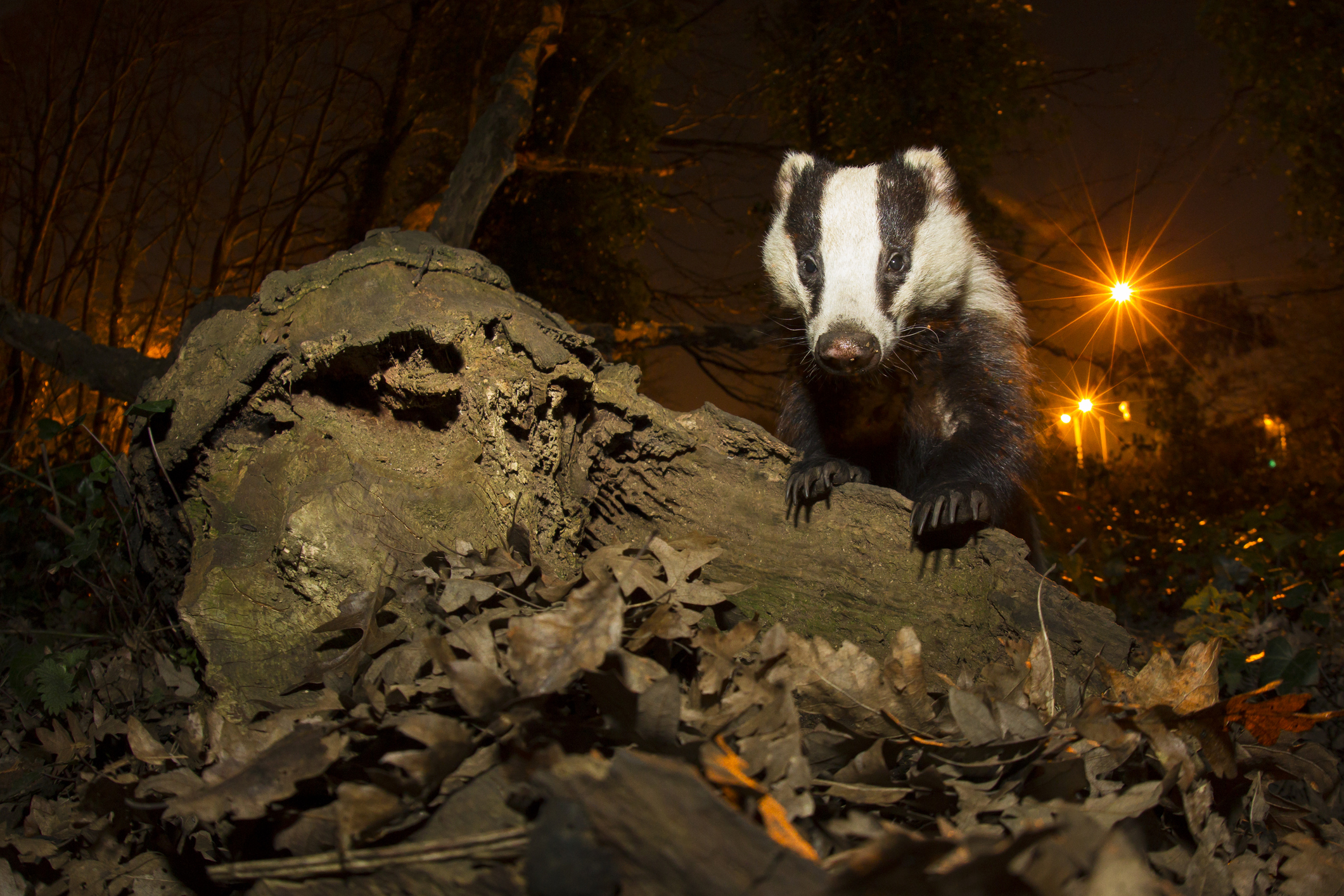 Amazing photos of nocturnal animals | Live Science