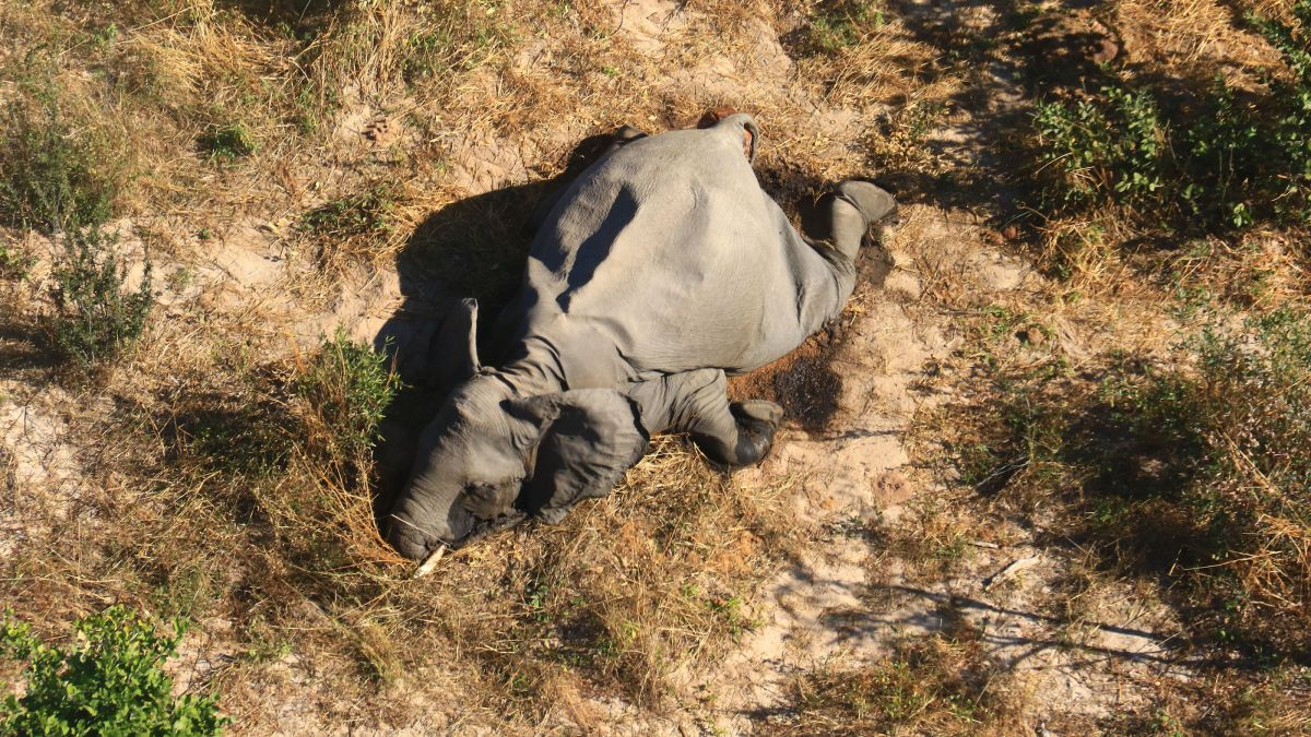 350 elephants drop dead in Botswana, some walking in circles before doing face-plants