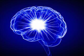 Illustration of the human brain.