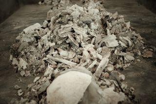 Cremated bone bits still have secrets to divulge.