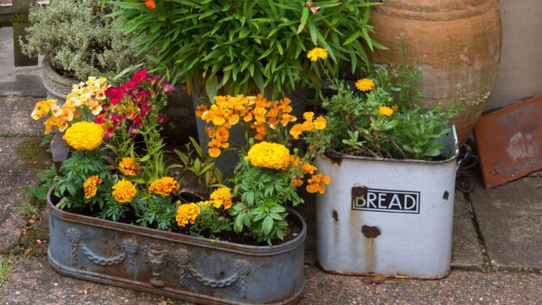 5 container gardening ideas that are perfect for small spaces