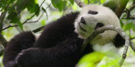11 Stunning Nature Documentaries Available On Disney+
