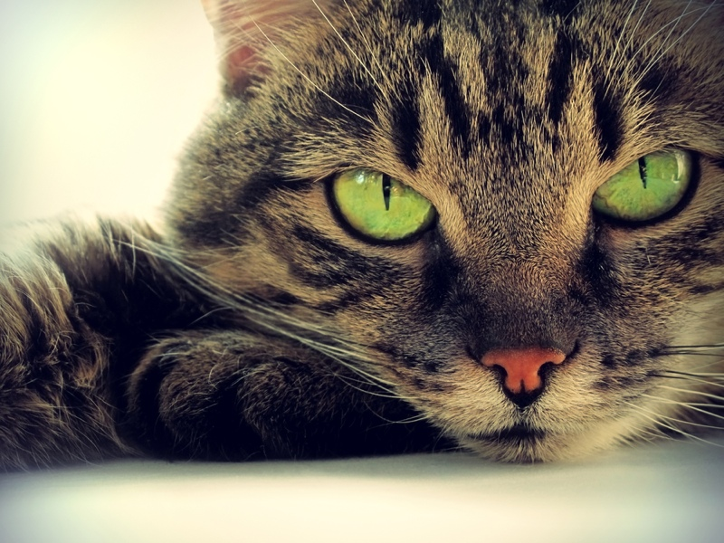 Why Cats Have Vertical Pupils Live Science