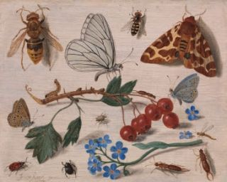 Butterflies, Moths and Insects with Sprays of Common Hawthorn and Forget-Me-Not | Jan van Kessel the Elder (1626 – 1679) | 1654 | Oil on Wood