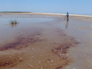 Oil near beach in Louisiana, May 17, 2010.