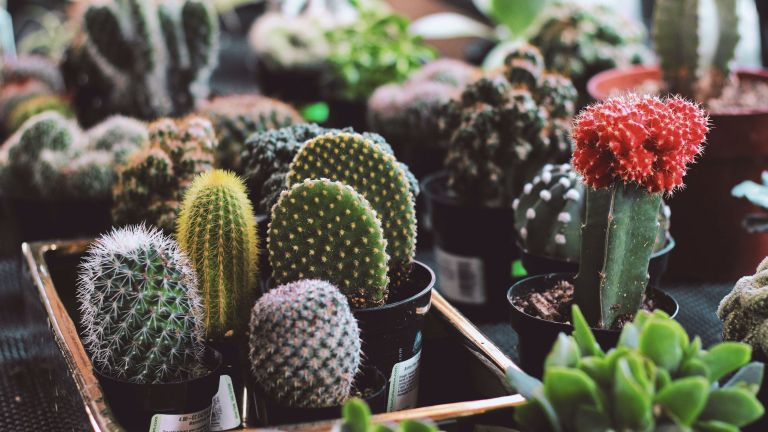 Cacti house plant care