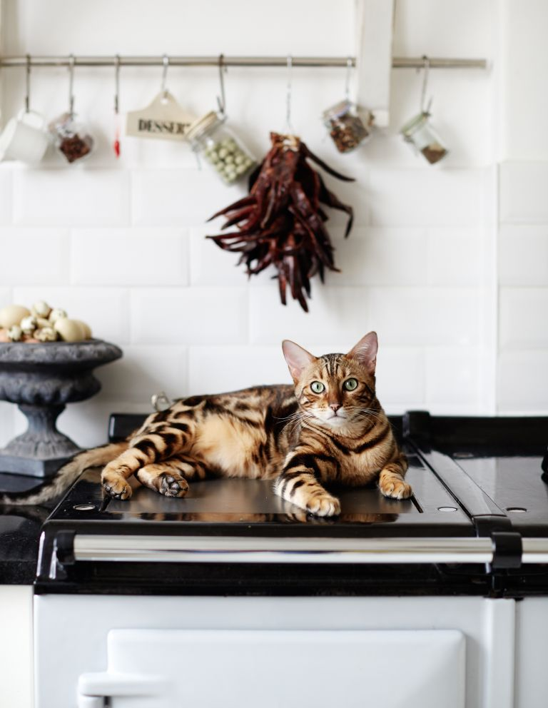 International Cat Day: cat on Aga in Georgian seaside townhouse