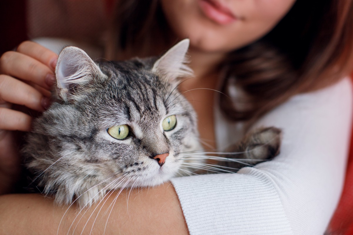 Here S The Best Way To Pet A Cat According To Science Live Science