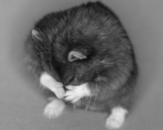 Mr. Goxx the crypto hamster