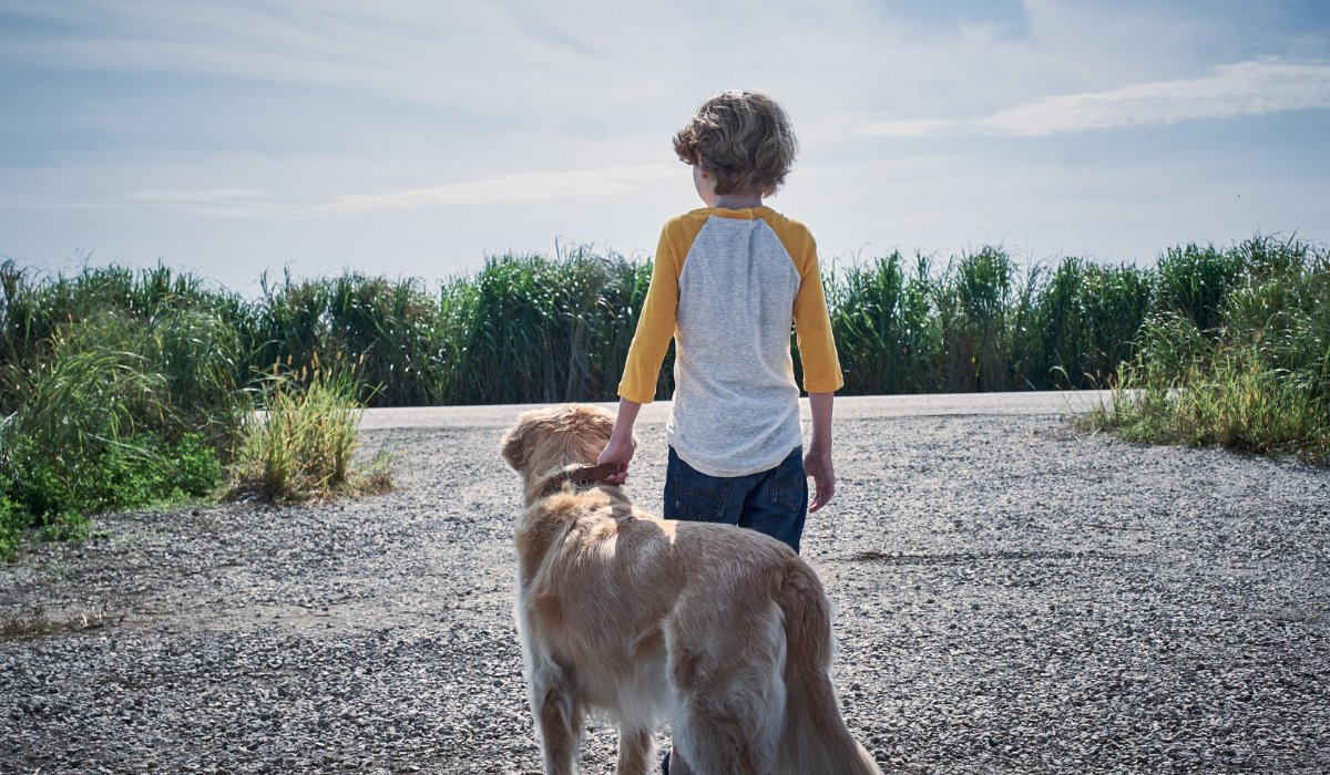 In The Tall Grass a random kid stands with a dog, in the middle of a dirt road