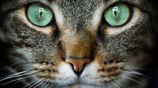 Cat's eyes watering