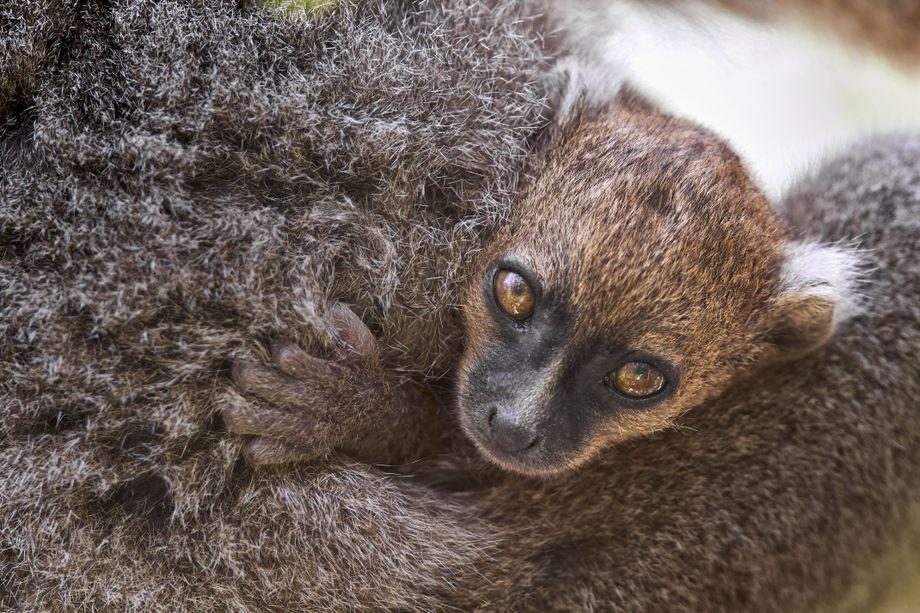 Lemur Earth's Tropical Islands