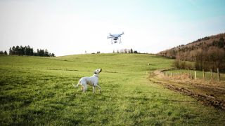 Lost dogs - dog in field looking up at drone