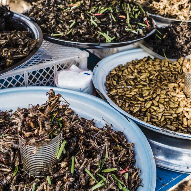 Food trends edible insects
