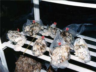 mushrooms growing on diaper waste
