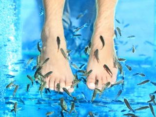 During a fish pedicure, people immerse their feet in a tub of water that contains small fish called Garra rufa.