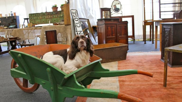 Jools the Spaniel chillaxing at Antiquesintents
