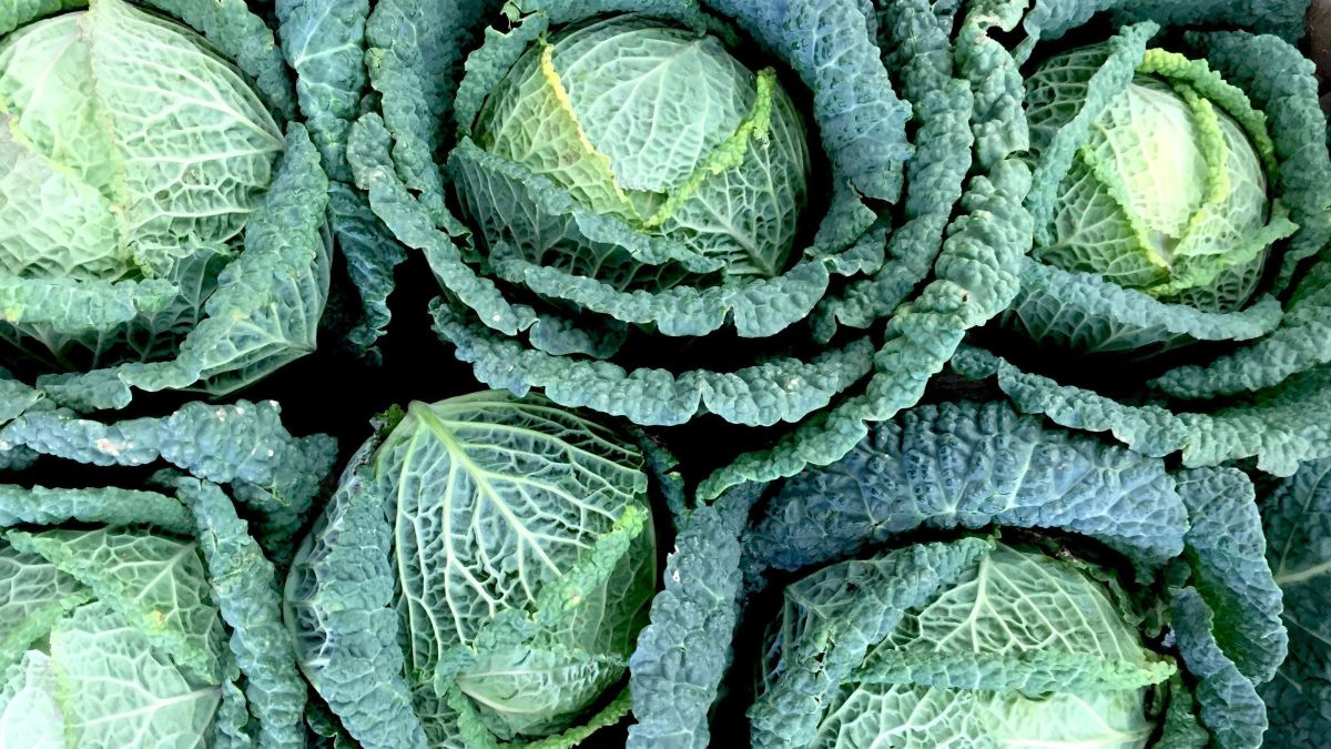 How to grow winter brassicas: expert tips for cabbage, cauliflower, kale, sprouts and sprouting