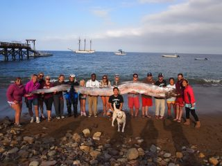 This 18-foot-long (5.5 meters) oarfish was found off a beach in Southern California on Oct. 13, 2013, and is held here by staff from the Catalina Island Marine Institute.
