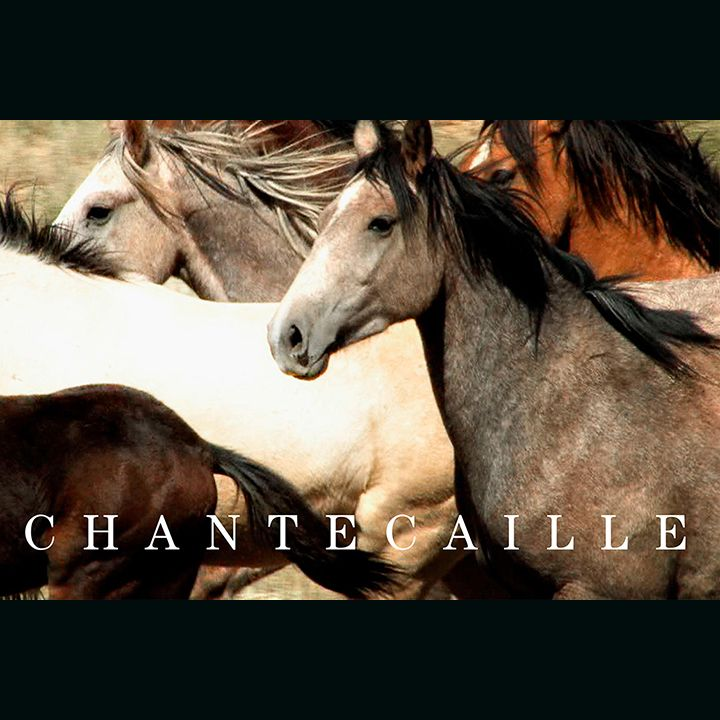 Photo of Chantecaille WIld Horses Palette