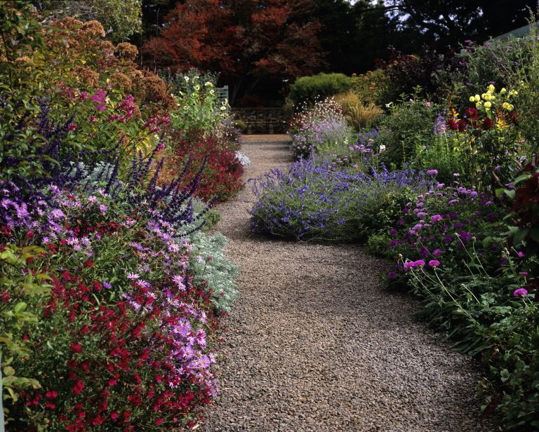 garden borders in autumn