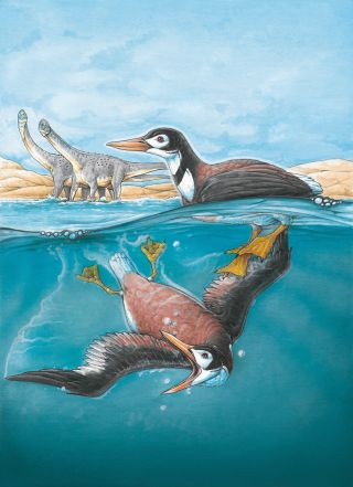 ancient bird Vegavis iaai