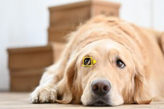 Nikon Z50 firmware update captures pets' eye portraits, among other goodies