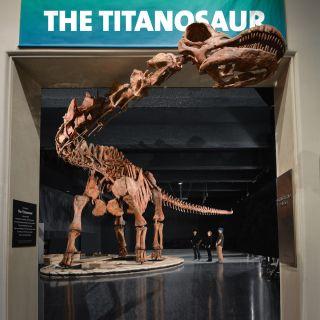 titanosaur fossils
